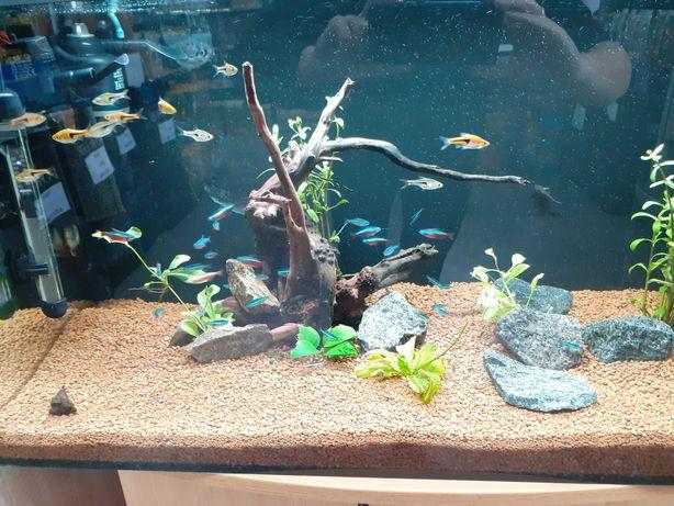 Ryby akwariowe - Sklep zoologiczny Skalar