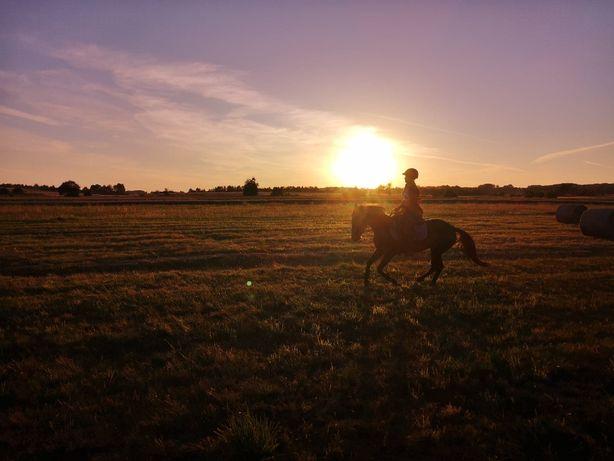 Rajdy konne, tereny, pławienie koni