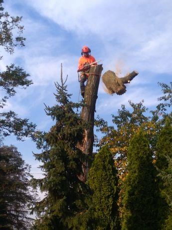 Cięcie przycinanie wycinka drzew Bełchatów Łódź Aleksandrów Pabianice