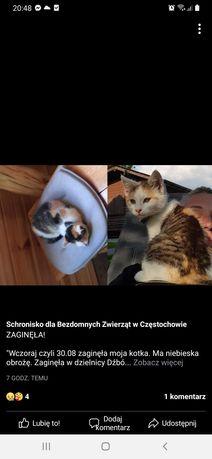 Zaginęła kotka Łatka!!!