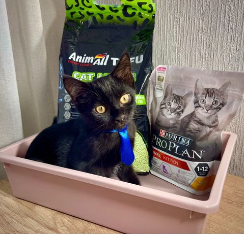 Котёнок в добрые руки + Подарок!