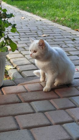 Біле кошеня підліток