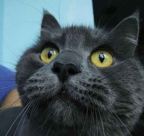 Утерян, убежал кот, поиск кота, пропал  серый кот Осокорки дачи
