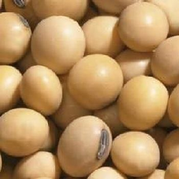 Семена сои Канадский нанотрансгенный сорт сои OLDHAM Bt насіння сої