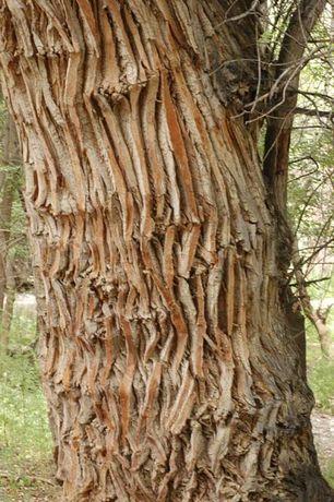 Продам дрова Тополь