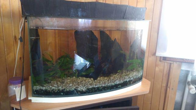 Akwarium 100l z wyposażeniem