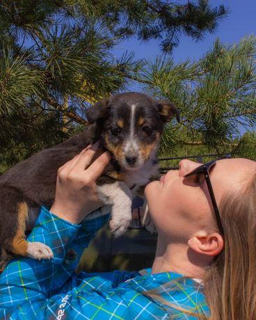 Собака Тоффи девочка 3 месяца, пёс, собачка, собака песик щенок щеня