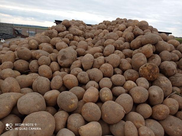 Sprzedam ziemniaki jadalne nie pryskane