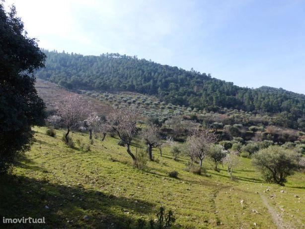 92 ha c/ Olival, Amendoal, Sobro e Floresta. Portugal, Bragança, T...