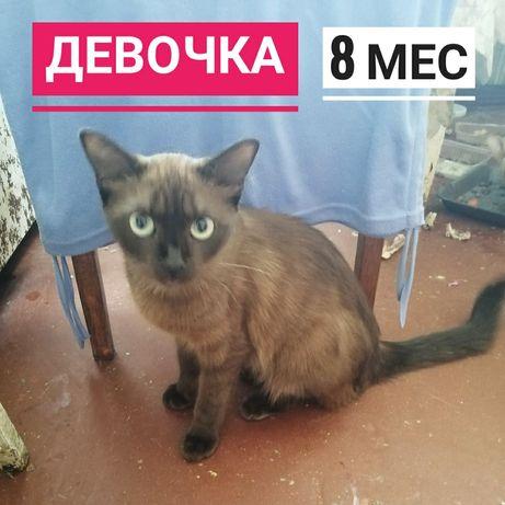 Котёнок девочка 8 месяцев, кошка в добрые руки, котята, кот