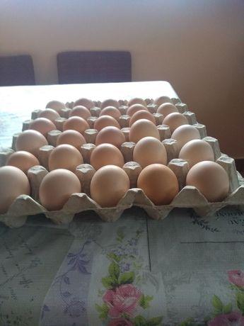 Sprzedam jajka swojskie