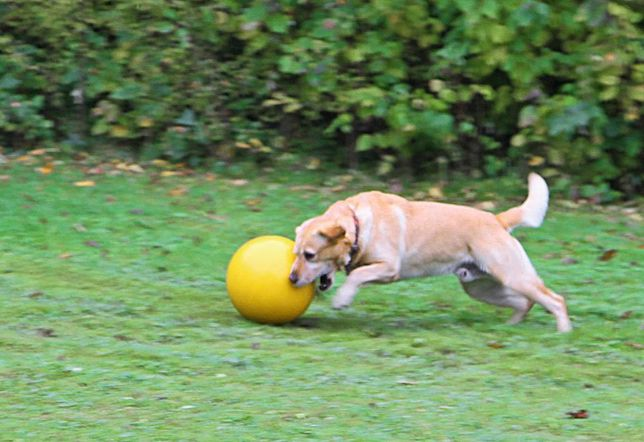 ZABAWKA psa, pies Piłka 30cm XXL wytrzymała pływająca
