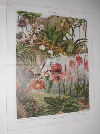 OWOCE, PAPUGI. ORCHIDEE, KRÓLIKI oryginalne XIX w. chromolitografie