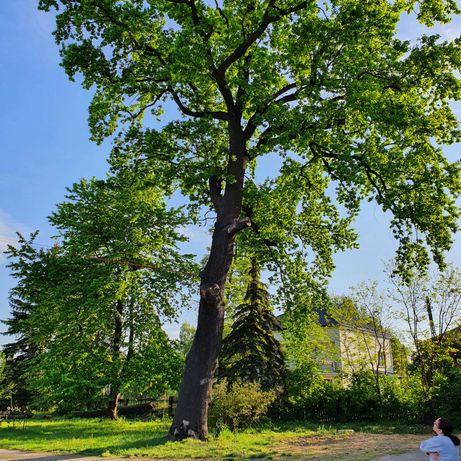 Tanio,wycena gratis.Wycinka drzew,uslugi mulczerem,rebakiem.