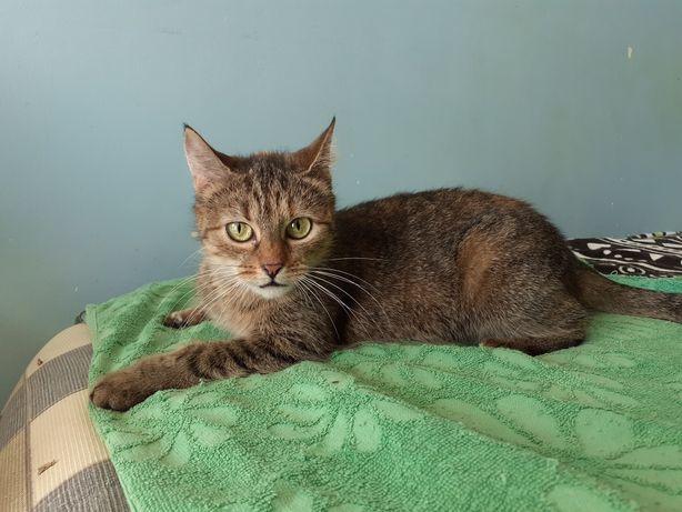 Łapka kotka z niewykształconą łapką czeka na domek