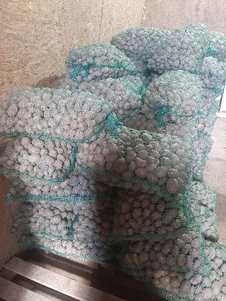 ziemniaki vineta bellarosa o kalibrażu 3-5,5 cm wielkość sadzeniaka