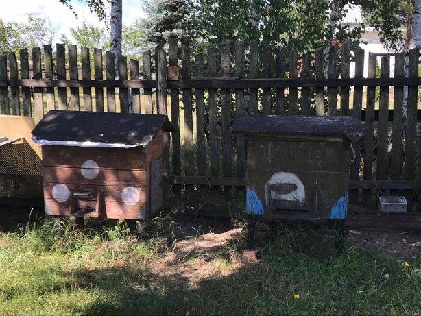 Pszczoły i ule na sprzedaż
