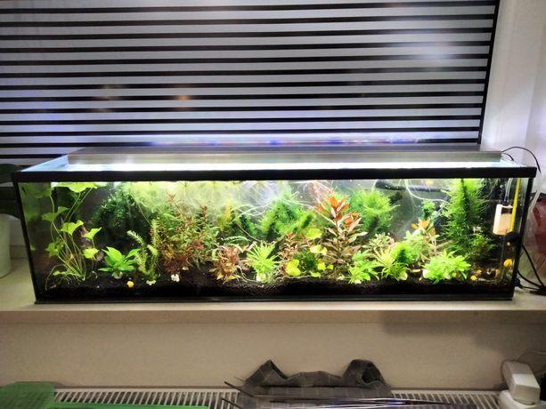 Akwarium Jamnik 90cm