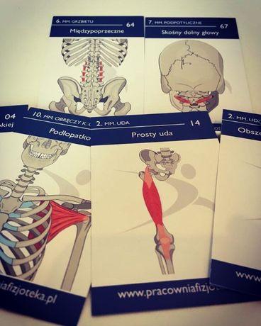 Karty anatomiczne z mięśniami