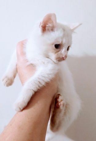 Очаровательный белый котик!