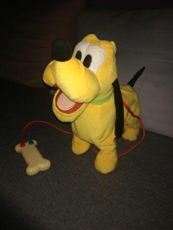 Piesek Pluto chodzi i szczeka...