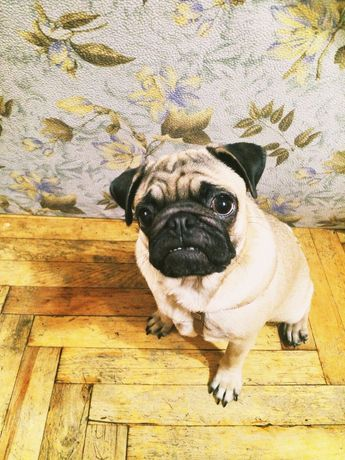 Подтяжки для собаки небольшой породы или щенка