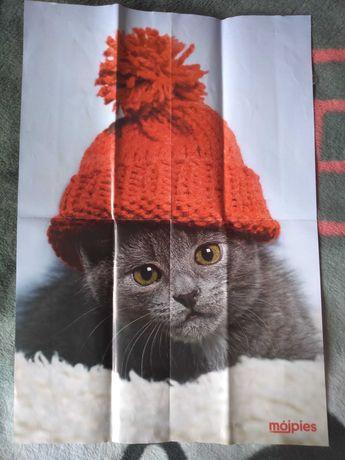 Plakat pies i kot