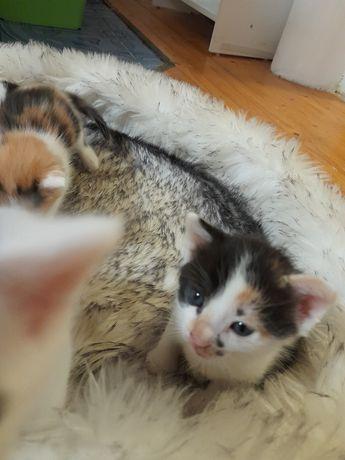 Śliczne maleńkie kotki