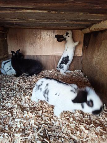продам кролики .