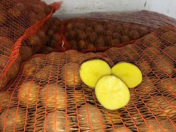 Ziemniaki kal. Sadzeniak 30-50mm Zólte i Czerwone Lord Laura Soraya