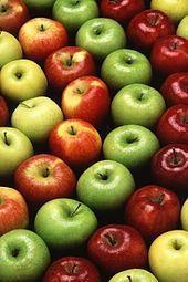 Саженцы яблок яблонь груш слив