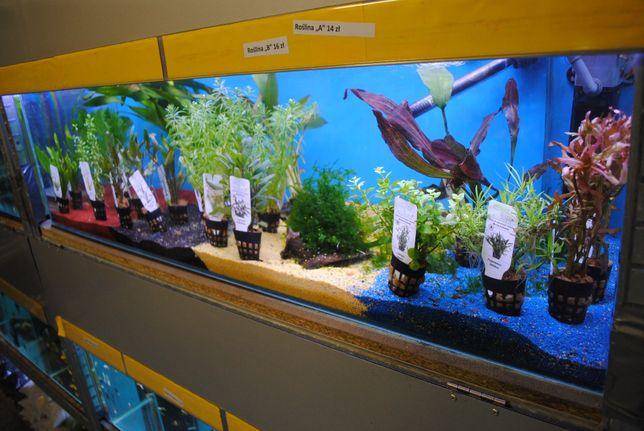 Podłoże akwarystyczne , kruszywo do akwarium