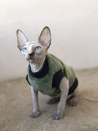 Теплая одежда для котиков