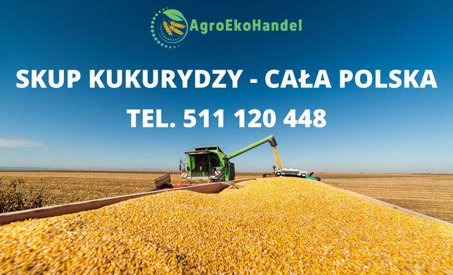 Skup kukurydzy - cała Polska