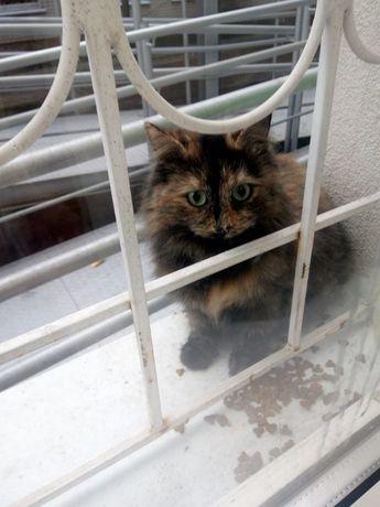 Пропоную дуже розумну кішечку,звати Фєнічка!)