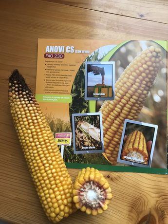 Nasiona kukurydzy Anovi CS, Herkuli CS, Arbori CS, Ostinati, Fondari