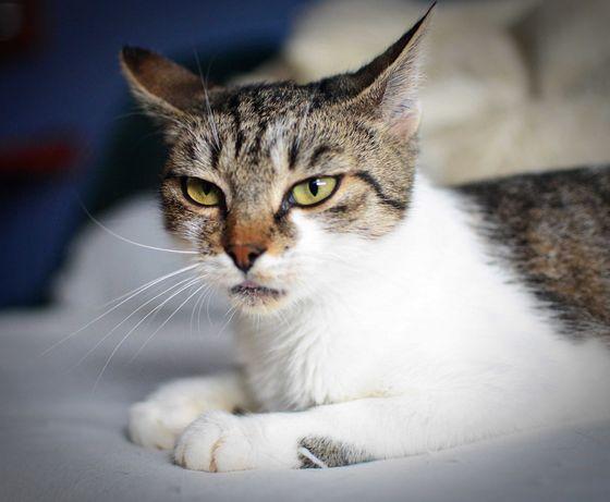 Cudowna Kocia Dama Lucy bardzo liczy na DOM