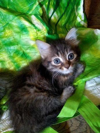 Віддамо кошеня у добрі руки