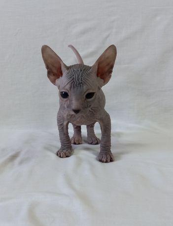 котята Донской сфинкс