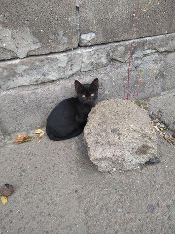 Отдадим чёрненьких котят