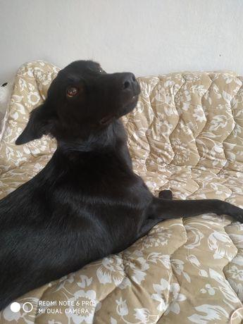 Собака стерилизована и привита в хорошие руки