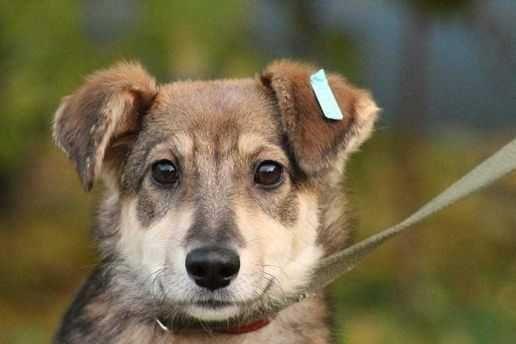 Мира, небольшая собака, щенок, 7 месяцев