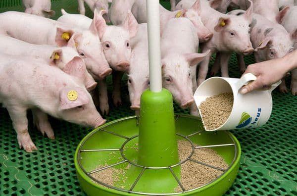 Заменитель цельного молока для животных сухое молоко комбикорм