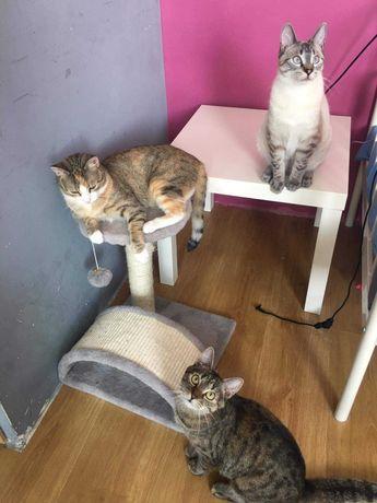 4 kociaki szukają domku