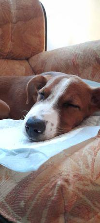 Cadela para adoção com dois meses