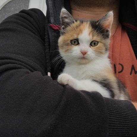 Віддам кіточку в добрі руки