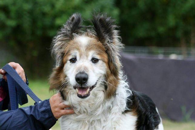 Większy, kochany pies szuka domu