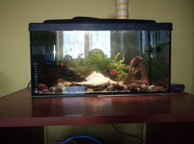 Zamienię dwa akwarium za jedno duże