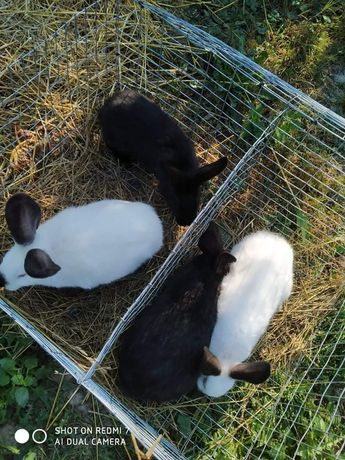 Продам кролі ціна 200грн