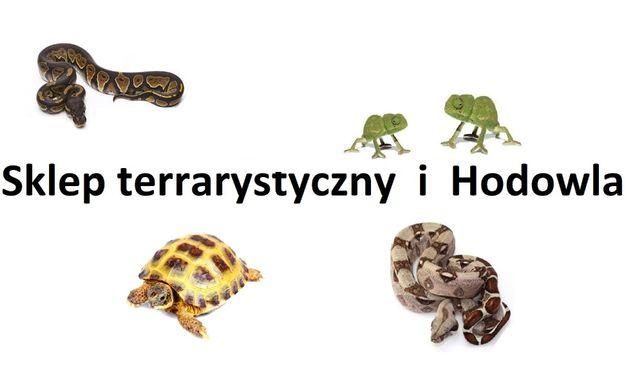 Różne węże do wyboru, same lub z terrarium.